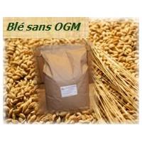 Weizen ohne OGM - 10 kg